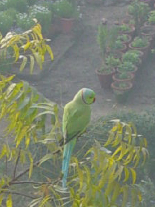 Parrot outside our window